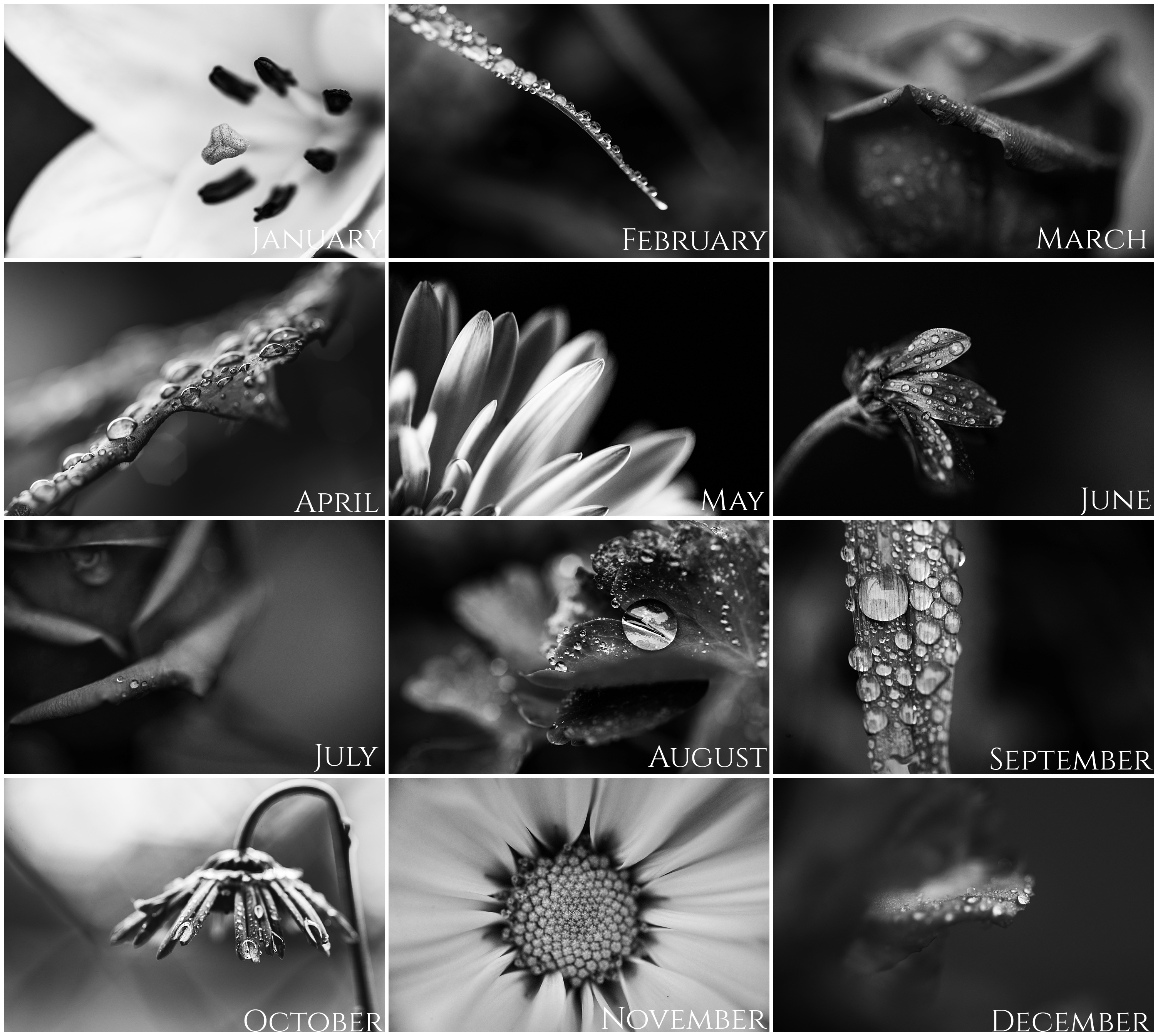 2018 black and white macro calendar aly dawn photography