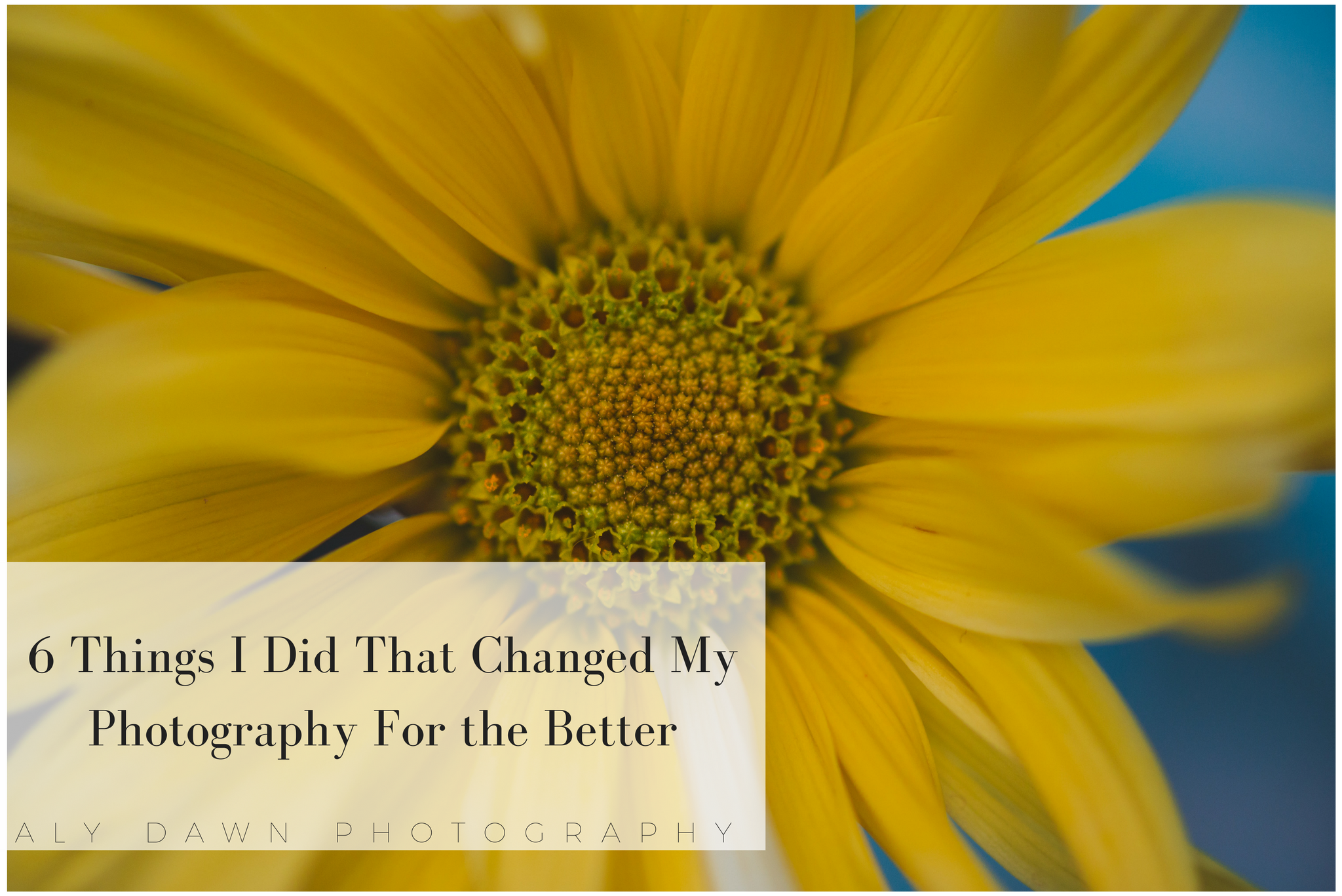6 Things I Did That Changed My Photography for the Better