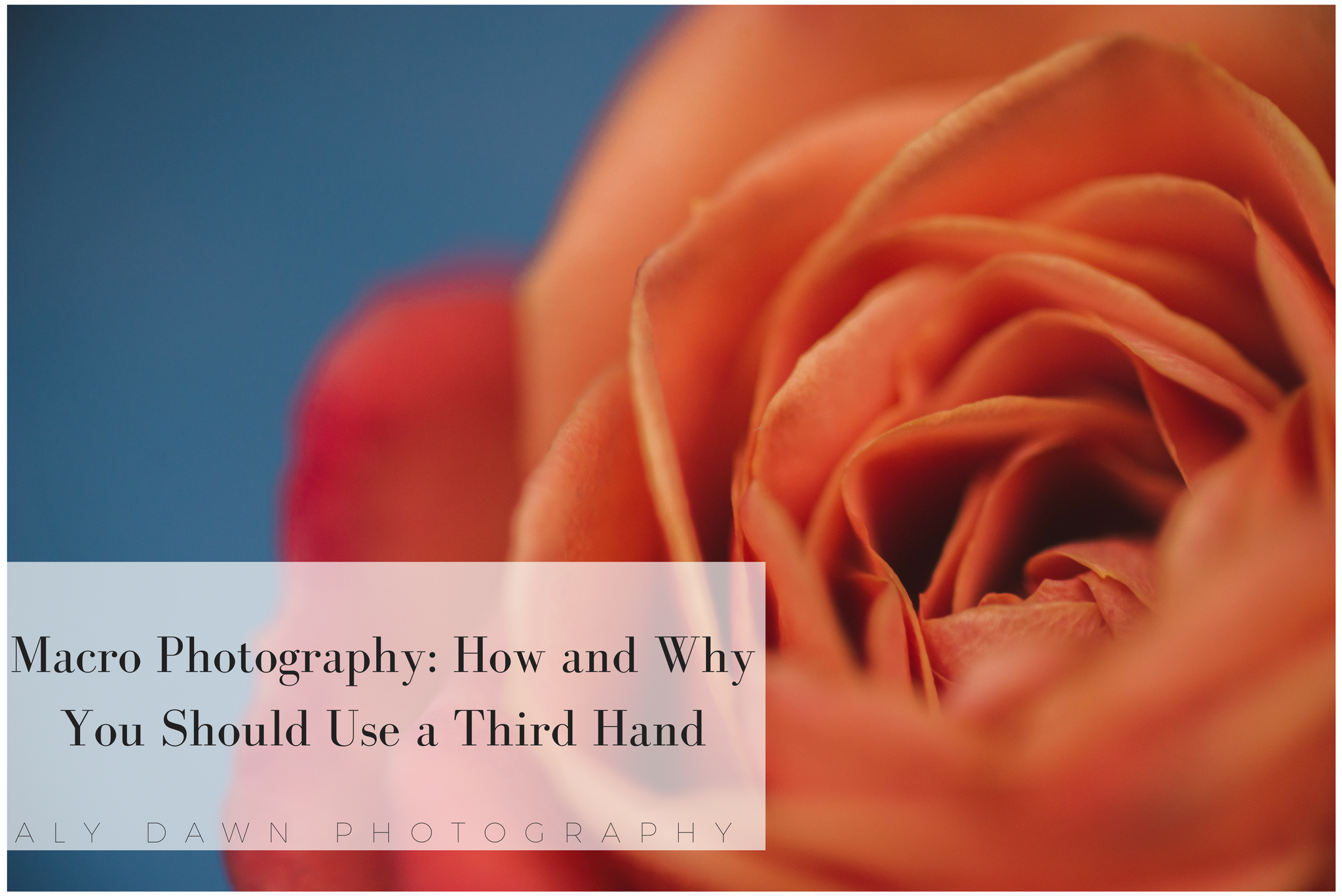 Macro Photography: How and Why You Should Use a Third Hand