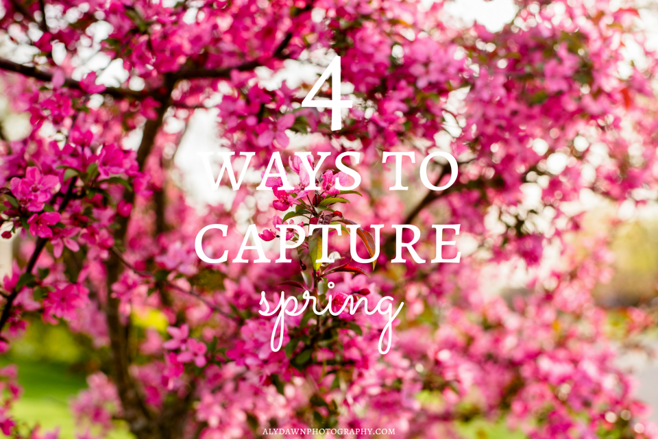 Aly Dawn Photography 4 Ways to Capture Spring