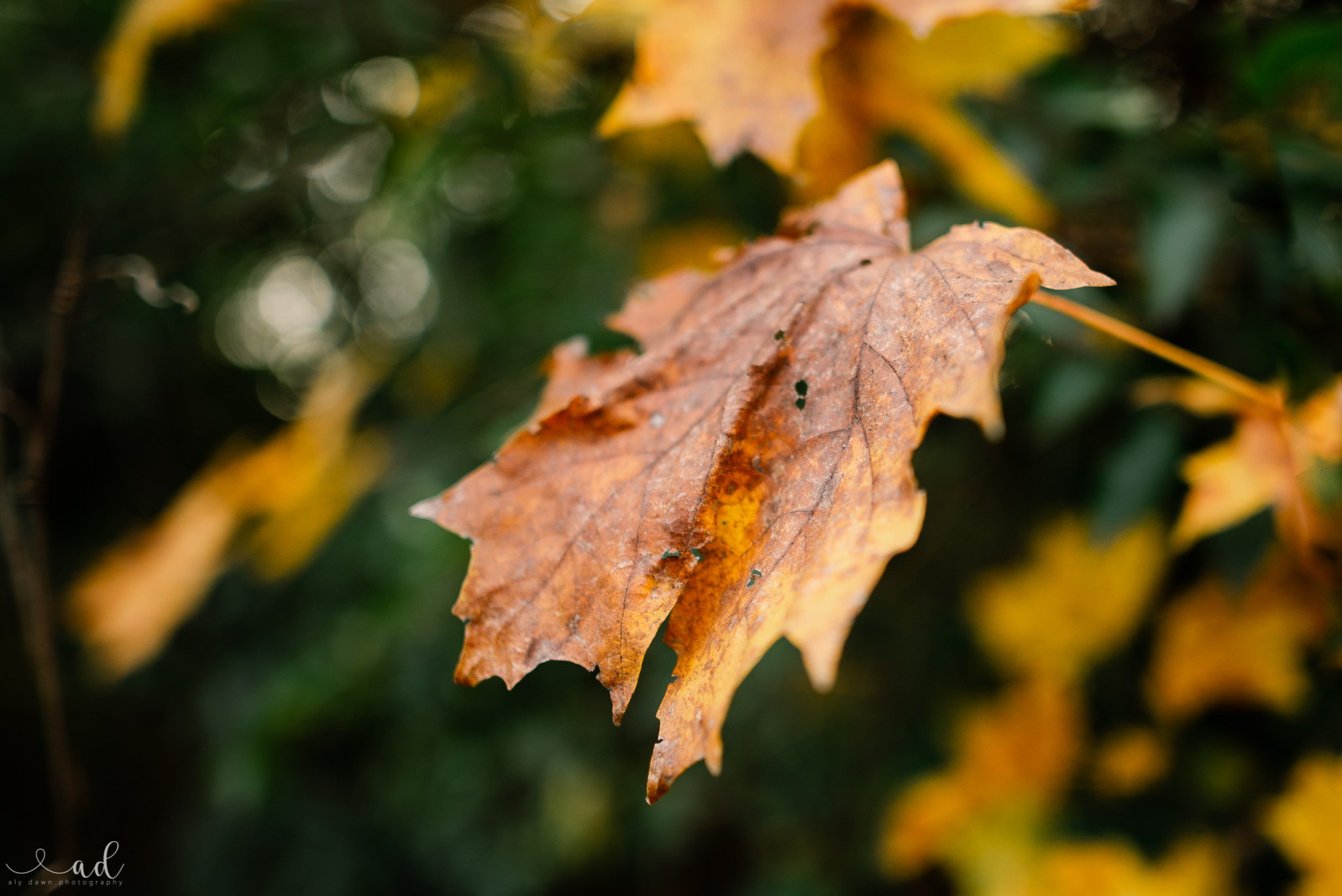 Fall Photography Tips - How to Capture Fall